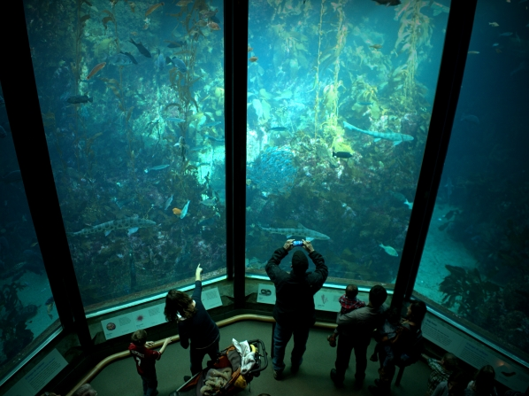Monterey Bay Aquarium Kelp Forest